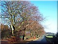 SK2884 : Tree-lined Lane near Ringinglow by Jonathan Clitheroe