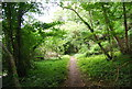 SU7720 : Sussex Border Path in Little Torberry Plantation by Nigel Chadwick