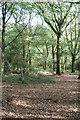 SW6333 : Woodland in Crenver Grove by Rod Allday