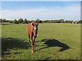 TL6456 : Dullingham Ley Stud by Hugh Venables