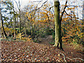 SJ9798 : Fern Bank, Stalybridge by David Dixon
