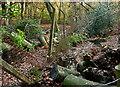 SU9684 : Stream through Brockhurst Wood by Graham Horn