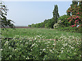 TL5978 : Paddock off Great Fen Road by Hugh Venables