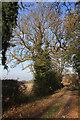 TL5663 : Cadenham Road : Week 46