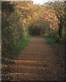 SS8583 : National Cycle Route 4 and some autumn colour in Cwm Ffos by eswales