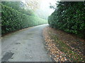 TQ0939 : Hedges on path to Ewhurst Green by Dave Spicer