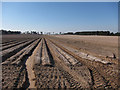 TL7779 : Potato field by Hugh Venables