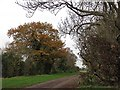 TL5062 : A fen drove in December by John Sutton