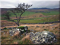 SD7870 : Tree and boulders below Studrigg Scar by Karl and Ali