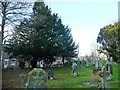TA0473 : Yew tree in the churchyard by Christine Johnstone