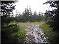 NY6985 : Forest Track Junction, Kielder Forest by Les Hull