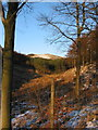 SJ9771 : Bollin Brook upper valley by Peter Turner