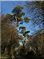 TQ3858 : Pines, Church Lane, Chelsham by Derek Harper
