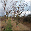 TL8902 : Trees line footpath by Roger Jones