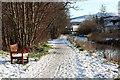 NT2541 : Path alongside Eddleston Water, Peebles : Week 51