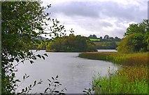 R5680 : Pigeon Island, Lough Bridget, near Ballynahinch, Co. Clare by P L Chadwick