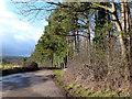 SO3139 : Edge of Park Wood : Week 52