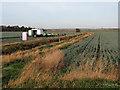 TL5269 : Picking leeks near Joist Farm by John Sutton