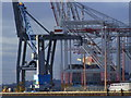 SU3811 : Southampton Container Port Heavy Lift Cranes : Week 2