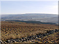 NY8239 : Ruined wall on moorland near Green Laws by Trevor Littlewood