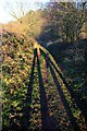 SJ5671 : The Delamere Way approaching Norley by Jeff Buck
