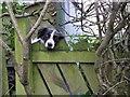 H4672 : Nice dog, Omagh : Week 4