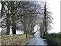 SE0343 : Hollins Bank Lane by Christine Johnstone