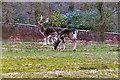 SJ7386 : Dunham Massey Deer Sanctuary by David Dixon