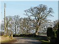 SE4806 : Winter tree alongside Bilham Lane by Christine Johnstone
