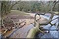 SZ2599 : Fallen Tree in Avon Water : Week 6