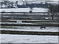 SK1170 : Three horses, wintry fields, Chelmorton by Peter Barr