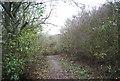 TQ7876 : Saxon Shore Way in High Halstow NNR by N Chadwick