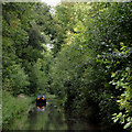 SJ6931 : The canal in Woodseaves Cutting, Shropshire by Roger  Kidd