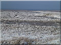 TF4034 : The Wash coast in winter - White salt marsh and blue sky by Richard Humphrey