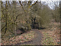 SD6404 : Footpath Through Cunningham Clough by David Dixon
