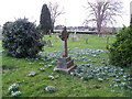 ST7818 : Snowdrops, St Gregory's Churchyard by Miss Steel