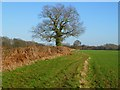 SP9100 : Farmland, Little Missenden by Andrew Smith