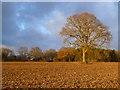 SP9106 : Farmland, Cholesbury by Andrew Smith