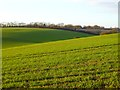 SP9205 : Farmland, Chartridge by Andrew Smith