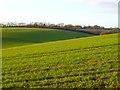 SP9205 : Farmland, Chartridge by Andrew Smith
