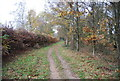 TQ2833 : Cycleway 20 by N Chadwick