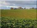 SP9905 : Farmland, Bovingdon by Andrew Smith