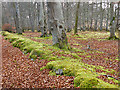 NH8852 : Mossy Dyke by Anne Burgess