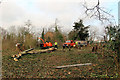 TL3501 : Tree Maintenance, Cedars Park, Cheshunt, Hertfordshire by Christine Matthews