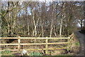 SJ8669 : Silver copse at Crabtree Moss Farm entrance, Marton Lane by Peter Turner