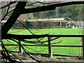 TQ8211 : The Firs, ex-home of defunct St. Leonards FC by nick macneill