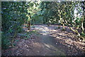 SJ7480 : Woodland path in Tatton Park garden by Bill Boaden