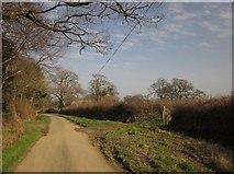 SX3388 : Lane near Eggbeare by Derek Harper