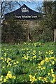 TQ5890 : Warley Daffs by Glyn Baker