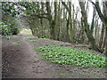 NS9780 : Woodland path in Kinneil Wood by M J Richardson